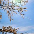 10_桜と青空