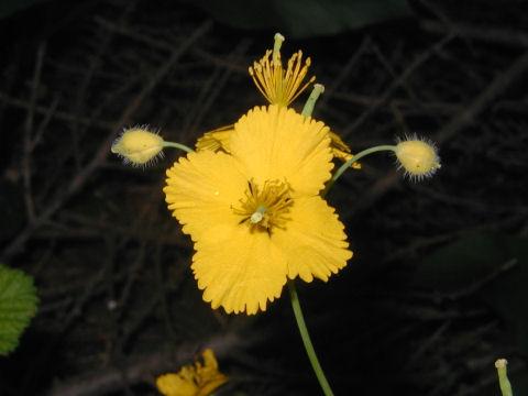 11_黄色の花