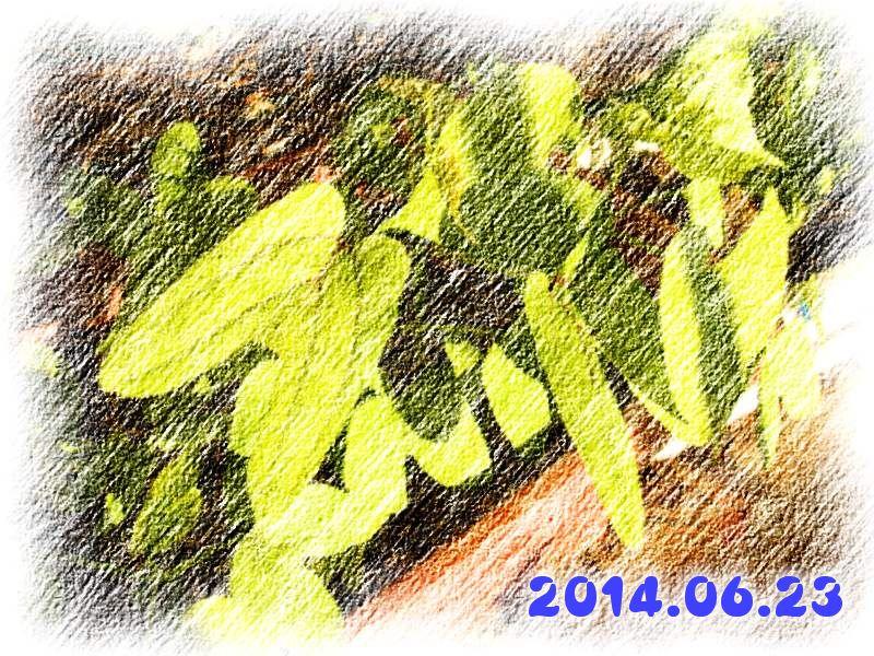 20140623_001